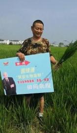 旱稻使用菌绿通大发现