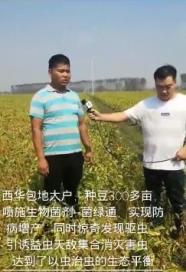 菌绿通在大豆效果反馈