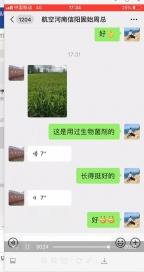 菌绿通开封水稻反馈