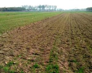 《小麦播种后避免这6大失误》