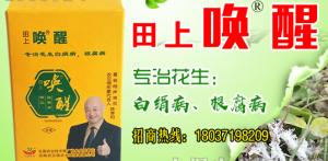 拌种剂厂家介绍花生白绢病的症状