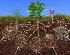 植物细菌病害有哪些呢?